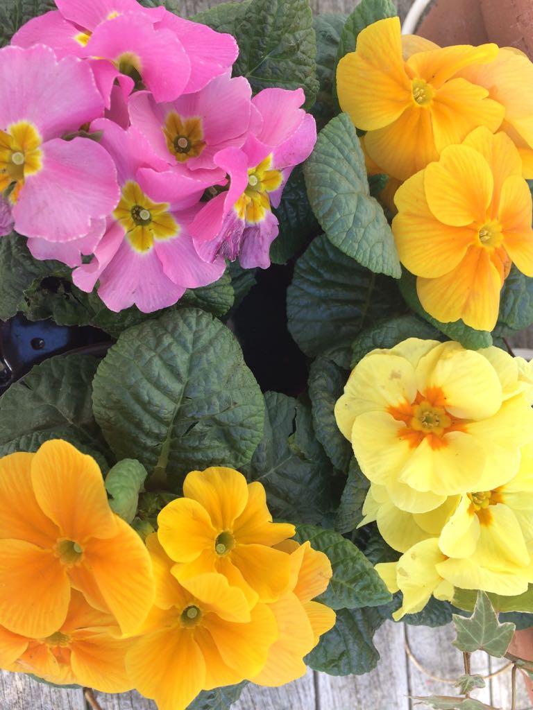 Spring has arrived at Spring Cottage