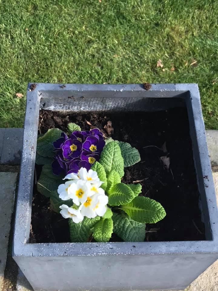 Spring at Spring Cottage